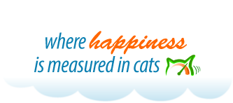 Where happiness is measured in cats