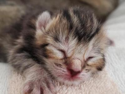 8 Kitttens Are Here - Domestic - Gallery Photo #1