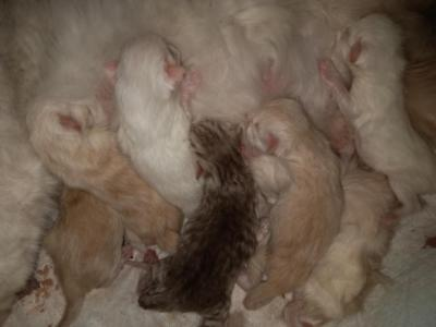 PERSIANS Arrived SEPTEMBER 9 - Persian - Gallery Photo #1