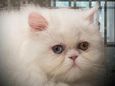 Vanier's One Of A Kind - Persian - Gallery Photo #1