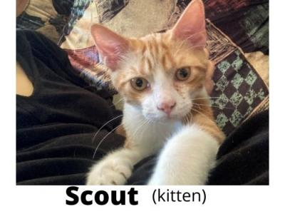 Scout - Domestic - Gallery Photo #1