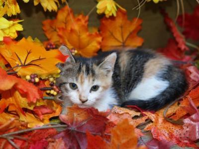 5 Kitties Calico's Plus Whites - Domestic - Gallery Photo #1
