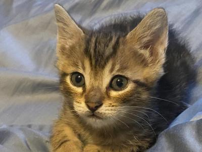 Winters Kitties - Bengal - Gallery Photo #1