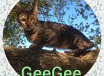 GeeGee - Cat For Sale - 5a9e164fd969e-AB86A393-EBC0-4AFB-8426-70DC12BD05CA.jpeg