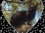Melody - Kitten For Sale - 5a9e17378c972-61D63D68-27F7-4851-B38E-B9AF1F0038A8.jpeg