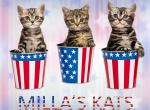 Milla's Kats - Kitten For Sale - 5b4811fc391f5-milla-s-kats-4th-of-july.jpg