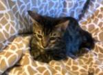 Ozzie - Kitten For Sale - 5bba4c355a94d-7B0C2DC4-FE55-4C33-B201-5B62FADF4FE5.jpeg