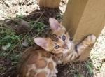 Tarzan & Jane Purple - Kitten For Sale - 5cc45ba628096-20190407_132537.jpg