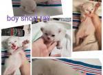 Boy - Kitten For Sale - 5d153657bf461-PhotoCollage_1561649928775.jpg