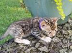 Libya - Kitten For Sale - 5d1f72f789826-20190628_191358.jpg
