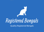 Bengaltime Cattery - Kitten For Sale - 5d6715c3920ed-Screen-Shot-2019-03-25-at-16.11.29.png