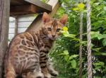 Egypt - Kitten For Sale - 5d73baa82a077-20190823_123004-0-.jpg
