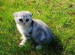 Martin - Kitten For Sale - 5dab5611a87c2-20191019_124921.jpg