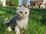 Martin - Kitten For Sale - 5dab562bb30df-20191019_125035.jpg