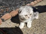 Alex - Kitten For Sale - 5dab56afd392f-20191019_123142.jpg