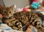 Jordan - Kitten For Sale - 5e1a58c1ac217-20200106_211146.jpg