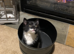 Boots - Kitten For Sale - 5e2620cd528a3-5B1C6FDF-6201-409B-86A1-FA7BB805CEEF.png