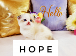 Hope - Kitten For Sale - 5e7ce25dd06de-wordswag_1585236597256.png