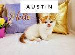 Austin - Kitten For Sale - 5e7fa1a2c017d-wordswag_1585342651663.png