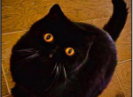 deposit received - Cat For Sale - 5e851964e3483-91444624_520964085474935_4595369630943412224_n.png