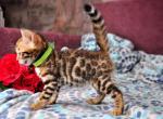 Geronimo - Kitten For Sale - 5e864b93b6c73-0-02-0a-0c7a3dbeb903bac1f91e1b2251f54e6f905d3fcdf5b8d6dde39c44622f5a7b75_94bffcdd.jpg