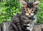 Hayder - Kitten For Sale - 5ec2e3560724a-0-02-05-4e55b62a0c3a87851b81d4fef7fb9b3aef136ff3c3b3641575ad44079e2fa799_c6da9b9.jpg