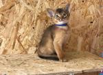 Yoshi - Kitten For Sale - 5ecd5e0038371-0-02-0a-a9722be15b7d0aa7b0ada47c790abae77df57bf14d3f86ffba96e37f7854ac47_71a2be6c.jpg