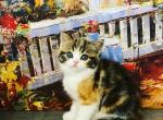 Barby - Kitten For Sale - 5ed177133a1c6-0-02-0a-83cb6a9072dfbfa27687acb2615fa904123876d8bbfa4c3cd557fb487d737b7a_f70bf5b0.jpg