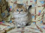 El Gato - Kitten For Sale - 5ed6cb9e16272-0-02-0a-93602e6984a28ec16a3082a576a7d936244e368b4deba55e138b15158a465b2e_f63f4efc.jpg