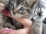 No Longer Available - Domestic Kitten For Adoption - Azusa, CA, US