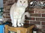 Tsar and Yeti Litter - Maine Coon Kitten For Sale - Columbia, MO, US