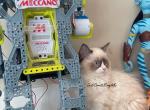 Kyra Seal Bicolor Ragdoll Kitten - Ragdoll Kitten For Sale - Amelia Court House, VA, US